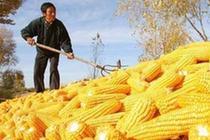 2017年内蒙古粮食价格回暖