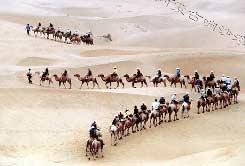 響沙灣的旅遊駝隊