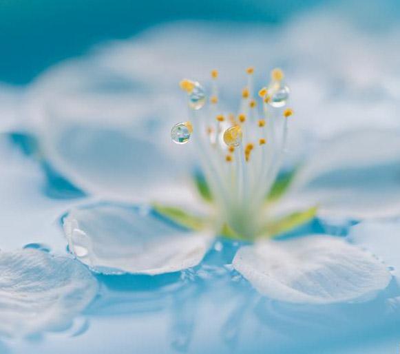 花朵折纸步骤图解