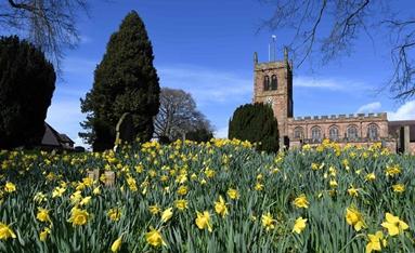 英國:水仙花開