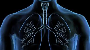 肺還是重要造血器官