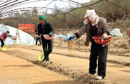 在烏審旗無定河鎮無定河村一些村民正在育水稻苗