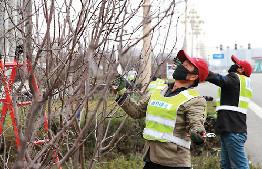 工作人員正在修剪剛種植好的海棠樹
