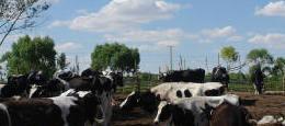 三潔養殖專業合作社奶源基地