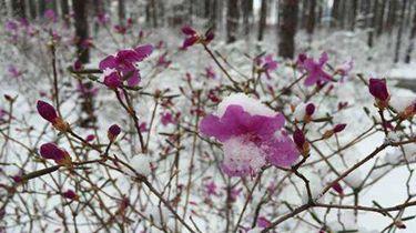 漠河立夏飄雪
