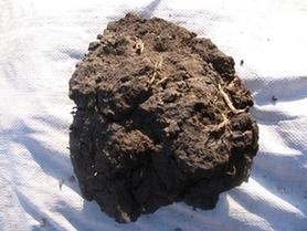 泥炭實物圖