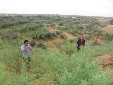 一輩子只做一件事 誓變沙漠為綠洲