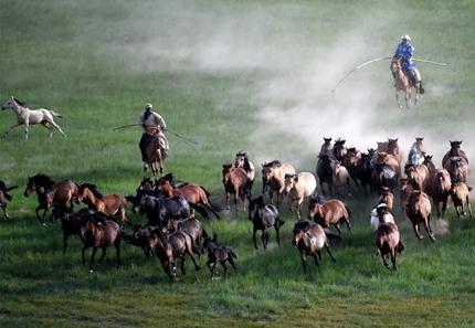蒙古馬逐漸回歸中國蒙古族牧民生活