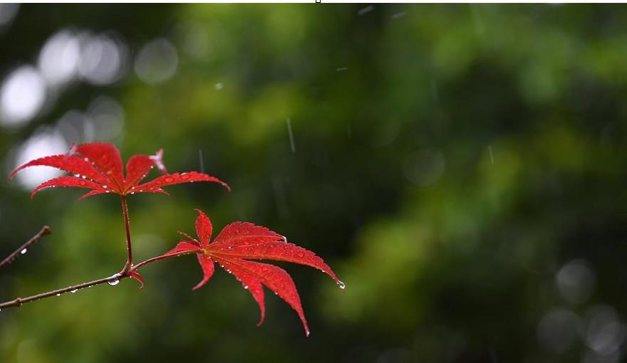 一場秋雨一場寒