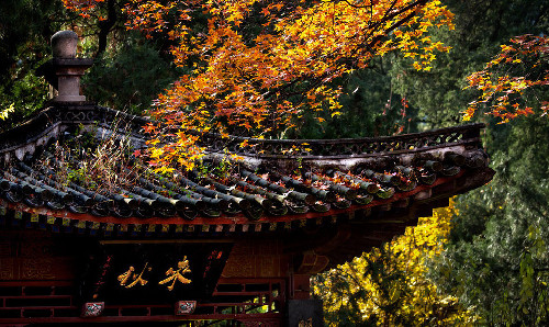 北京香山景區觀紅葉正好