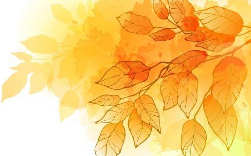 美美的秋葉能幹點兒啥