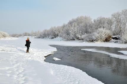 呼倫貝爾:雪淞壓枝頭