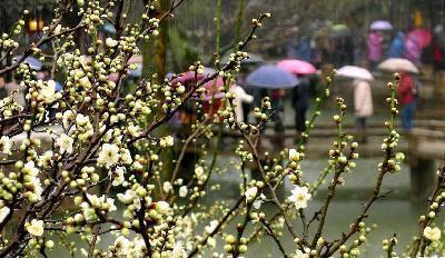 雨水潤花開