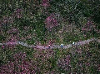 西溪濕地 曲水尋梅