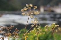 小满丨晴日暖风生麦气 绿阴幽草胜花时