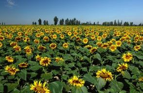 内蒙古3旗县入选全国农村创业创新典型县