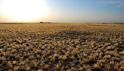受持续干旱影响 内蒙古受灾草场面积达5.5亿亩