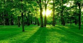 """【中央环保督察""""回头看""""】乌兰浩特市加强树木移植审批管理 依规处理相关责任人"""
