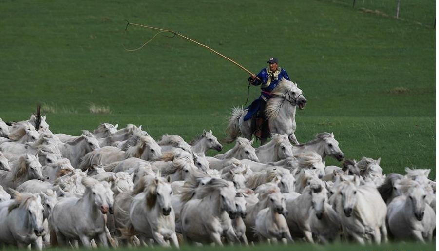 皎皎白馬奔馳草原