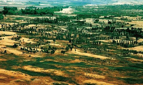 從一棵樹到19萬畝林——官井村沙海翻身記