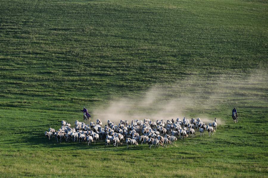 草原、白马,诗和远方......
