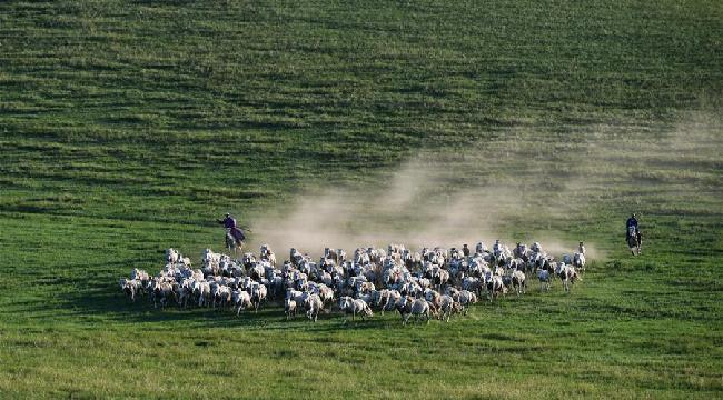 草原、 白馬, 詩和遠方......