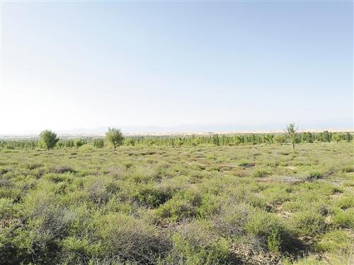 大漠深處的綠色傳奇——庫布其沙漠生態修復記(上)