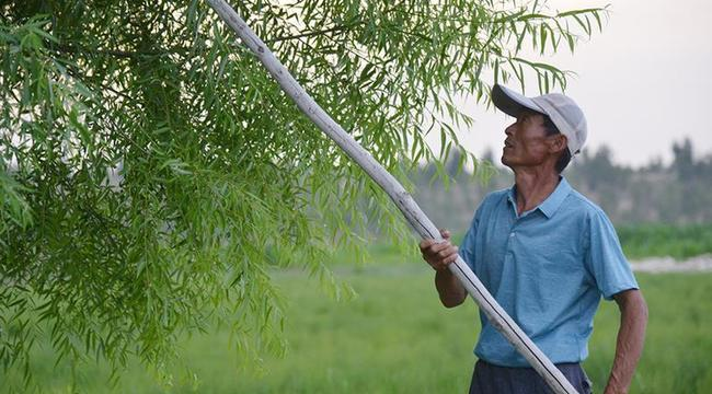 父子造林30年 林進沙退綠富同興