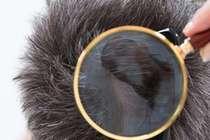 """黑科技:用头发就能检测出""""瘾君子"""""""