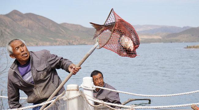 呼和浩特哈拉沁水库迎来捕鱼丰收季