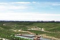 呼和浩特:大青山前坡总体生态功能恢复