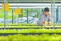 """巴彦淖尔:现代农业""""植入""""科技基因"""