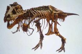 內蒙古新發現一處恐龍化石群
