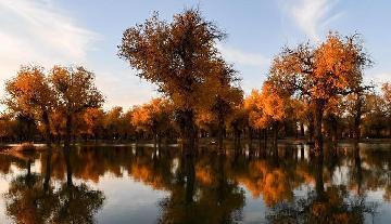胡楊林:一首寫給秋天的詩