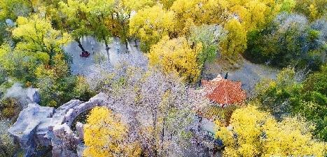 深秋城市公園 預設的美也將驚艷你