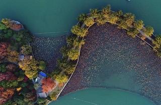 層林染翠湖