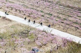 桃花朵朵春滿園