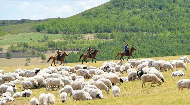 阿魯科爾沁草原景色美