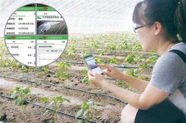 遠程技術指導助力中國北疆農牧民生産活動