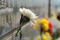 """呼和浩特倡導市民""""過平安清明 寄綠色之思"""""""