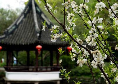 上海:古典園林春意濃