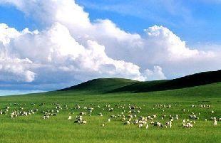 內蒙古羊肉地理