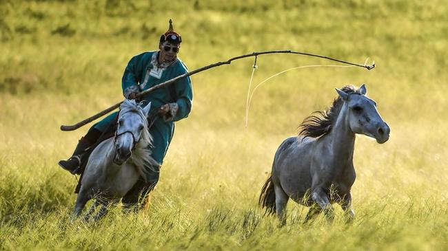 盛夏草原 激情套馬