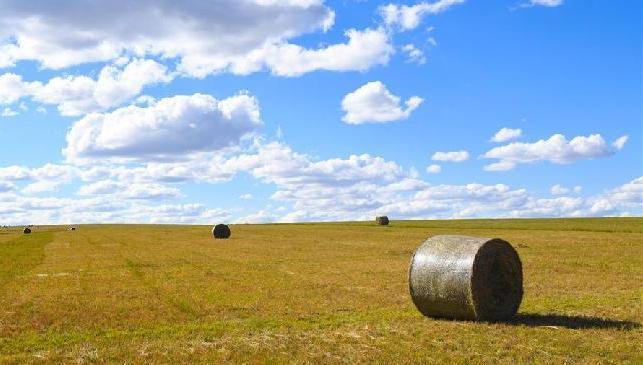 內蒙古錫林郭勒:草原迎來打草季