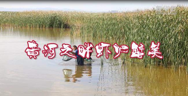 黃河之畔蝦肥蟹美