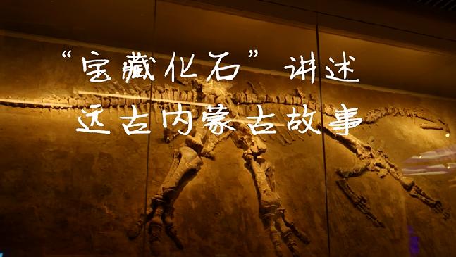 """""""寶藏化石""""講述遠古內蒙古故事"""