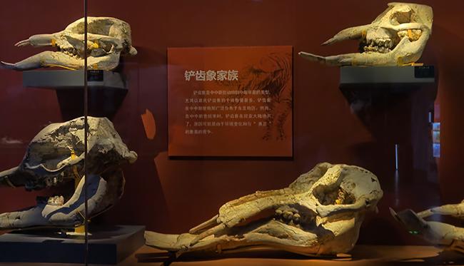 """【國際化石日】到自然博物館與化石打個""""招呼"""""""