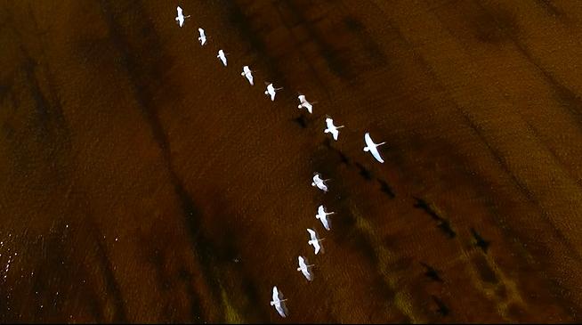 黃河岸邊 候鳥南飛