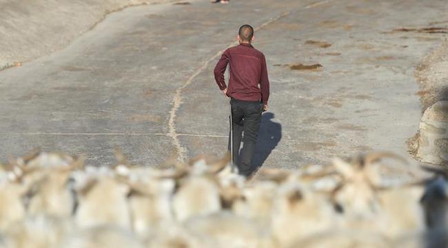 """羊倌任建成:獨腿""""奔跑""""在脫貧致富路上"""
