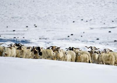 雪後的嘉塘草原